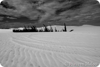 White Sand Dunes- Mui-Ne