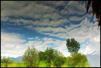 Reflections on the Dal, Lake, Srinagar