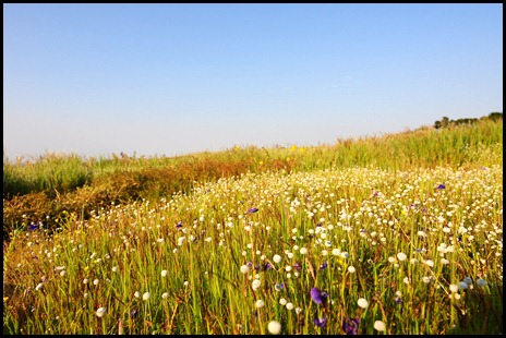 Variety of flowers can be seen at Kas