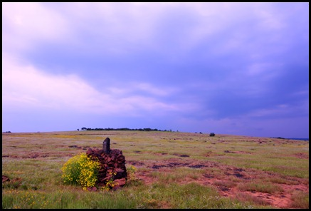 Kaas - The plateau of flowers in Maharashtra