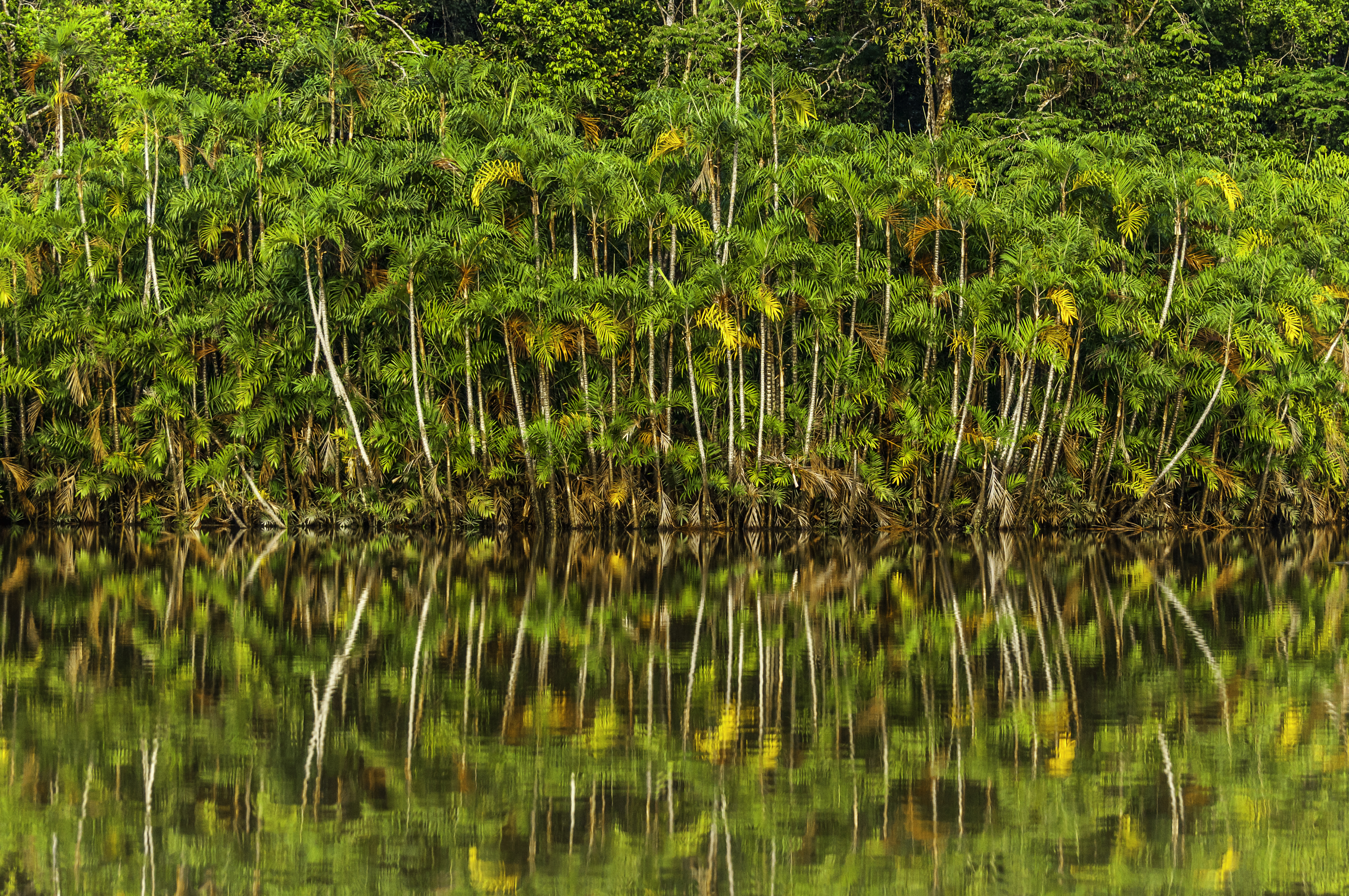 Reflection of the Amazon forests on Laguna Panacocha