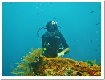 Diving the Liberty ship wreck, Bali