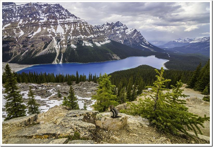 Lake Peyto's amazing blue, Banff National Park