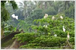 A pleasant Balinese village of White Herons